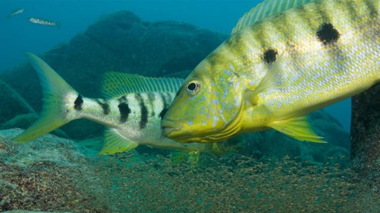 photography factual Our Planet (Coastal Seas)